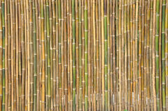 Bamboo pattern for background. & image Stock Image