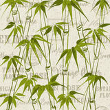 The Bamboo pattern Stock Image