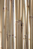 Dry bamboo royalty free stock images