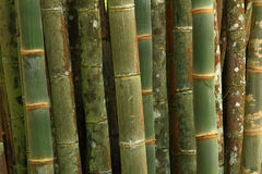 Bamboo patterns Stock Images