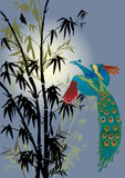 Bamboo and peacock illustration Stock Image