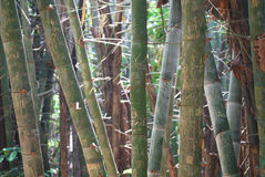 Bamboo. People's name were writed on bamboo at Huaymaekamin, kanchanaburi Royalty Free Stock Photo