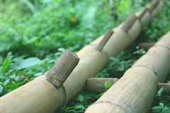 Bamboo. Photo image  with bamboo cane in the forest Royalty Free Stock Photos
