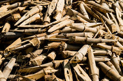 Bamboo Stock Images