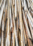 Bamboo pile Royalty Free Stock Photography