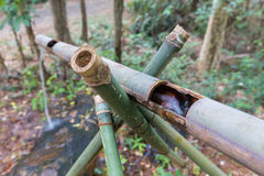 Bamboo Pipeline in the Forest Royalty Free Stock Photo