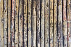 Bamboo plank Stock Image