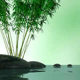 Bamboo plant. And stones over a lake Stock Photos