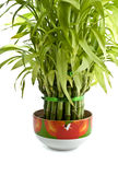 Bamboo plant Stock Photo
