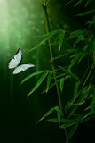 Bamboo plant and butterfly. Green Bamboo plant and butterfly Stock Image