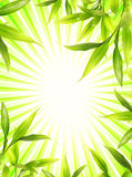 Bamboo plant frame. Over abstract green background royalty free illustration