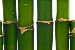 Bamboo plant isolated. Over white background royalty free stock photo