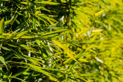 Bamboo. Plant leaves in a grass green Stock Photos