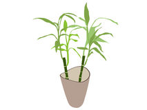 Bamboo plant in pot Royalty Free Stock Image