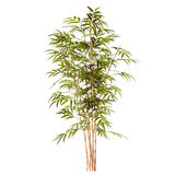 Bamboo plant Royalty Free Stock Photos