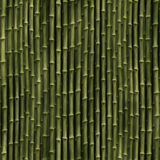 Bamboo plants Stock Image