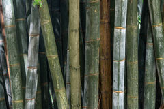 Bamboo plants background Stock Photos