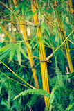 Bamboo Plants Stock Photos