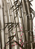 Bamboo and plum tree Royalty Free Stock Photos