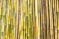Bamboo Pole Fence. Fence made out of upright bamboo poles Stock Photos