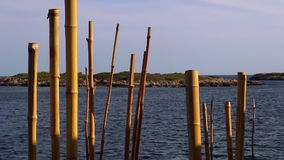 Bamboo poles in the water stock video footage