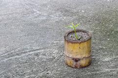 Bamboo pot Royalty Free Stock Image