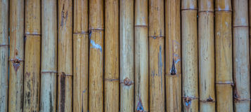 Bamboo. Quality natural bamboo fence background Royalty Free Stock Photos