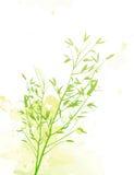 Bamboo Rain Stock Image