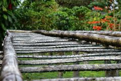 Bamboo raised beds. For drying coffee in Boquete, Panama Stock Images