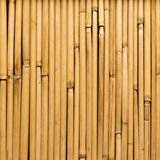 Bamboo reeds Royalty Free Stock Photography