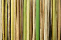 Bamboo Reeds Close-up Royalty Free Stock Photos
