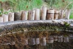 Bamboo Reflected Botanical Gardens Sao Paulo Brazi Royalty Free Stock Photos