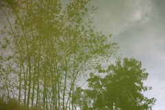 bamboo reflection in a pond Royalty Free Stock Photos