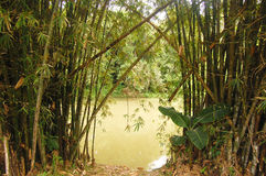 Bamboo and river. Bamboo on the riverside at rest area, Papua New Guinea Stock Photo