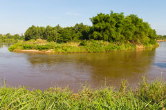 Bamboo river island Stock Images
