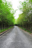 Bamboo Road Royalty Free Stock Image