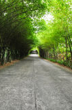 Bamboo road. The walkway of bamboo road to long destination Stock Images
