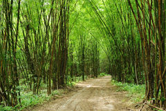 Bamboo road. The country road in bamboo forest stock photo
