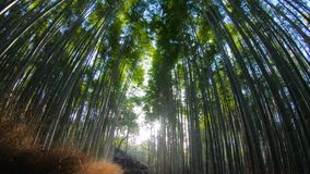 Bamboo Road, Arashiyama, Kyoto, Osaka, Japan. Muko-shi in Arashiyama. Low angle track shot stock footage