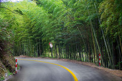 Bamboo by the road Stock Image