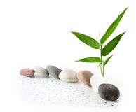 Bamboo and Rocks Stock Image
