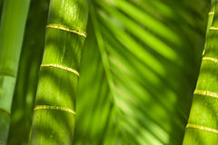 Bamboo rods and leaves Stock Photography