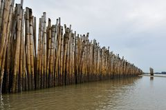 Bamboo row to protect the waves. stock photos