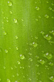 Bamboo's leaf royalty free stock photography