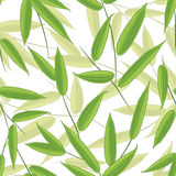 Bamboo's leaves Stock Photos
