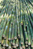 Bamboo is sawn Royalty Free Stock Image