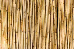 Bamboo screen Stock Photo