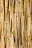 Bamboo screen Stock Image