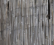 Bamboo screen Royalty Free Stock Photo