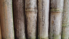 Bamboo screen Stock Images